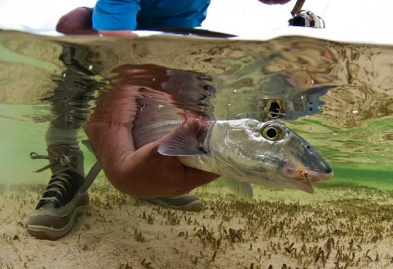 Bonefish Photograph