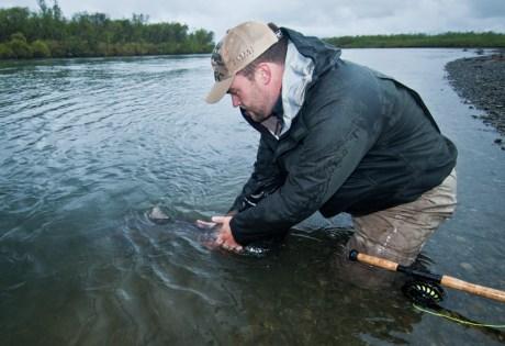 King Salmon Release