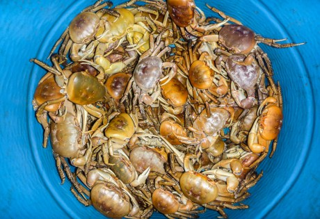 Land Crabbing