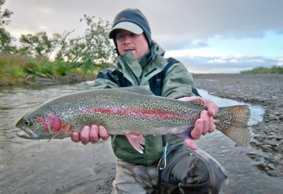 Alaska Trout Questions