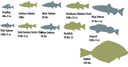Fish Species at Rapids Camp