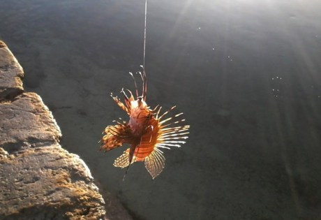 South Andros Island Lionfish
