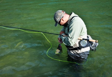 Clean Release of Non-Targets