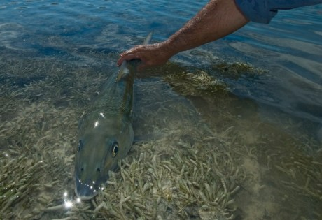 Bonefish Head On