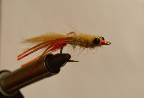 The Spawning Mantis Shrimp.. Photo: Kyle Shea.