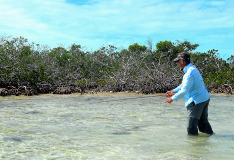 Fly Fishing for Bonefish in Mangroves