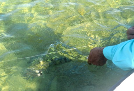 Fly Fishing for Bonefish