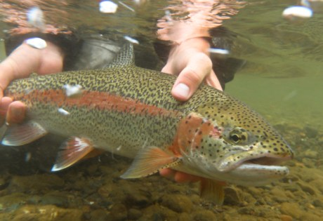 Fly fishing for trout in Alaska