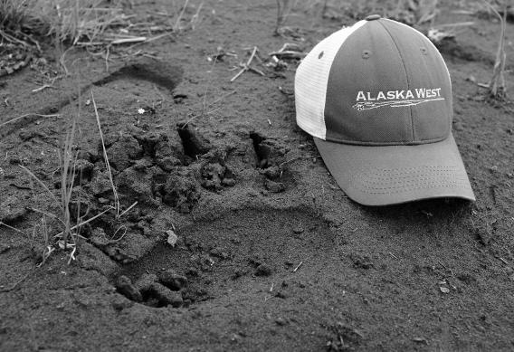 Brown bear track at Alaska West
