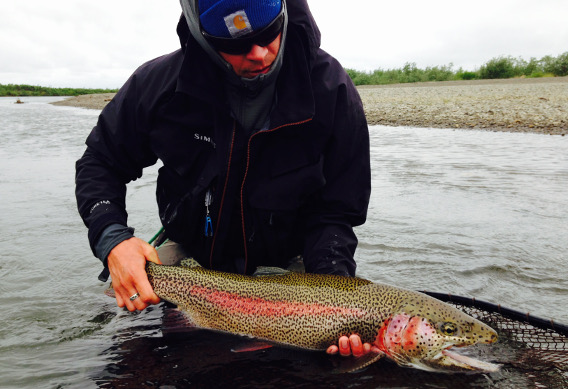 Fly Fishing for Leopard Rainbow Trout in Western Alaska
