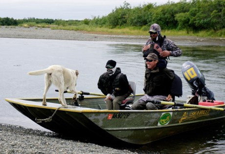 Camp Dogs at Alaska West