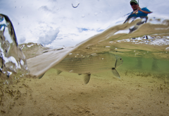 Underwater picture of landing a bonefish by Tosh Brown.
