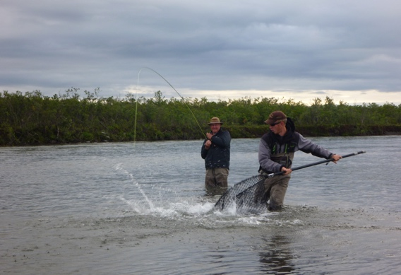 Landing silver salmon on the fly at Alaska West.