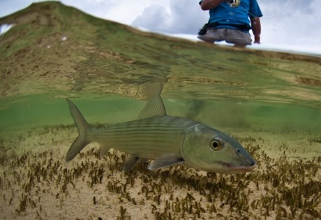 South Andros Bonefish by Tosh Brown Photography.