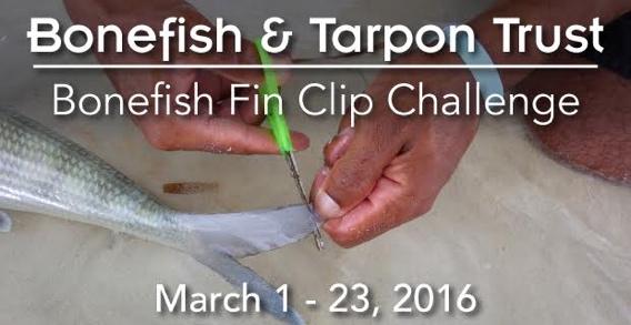 BTT Bonefish Fin Clip Challenge.