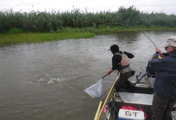 Fly fishing for salmon and trout in high dirty water.