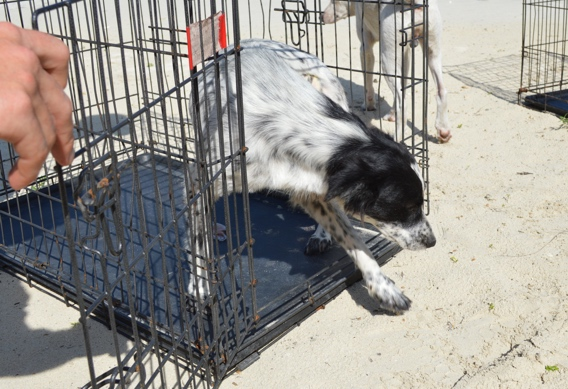 Spay and neuter clinic at Andros South
