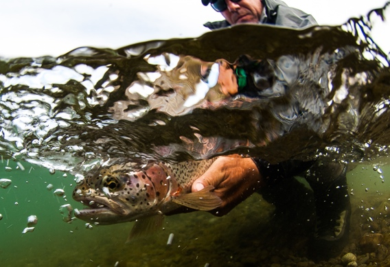 Fly fishing for rainbow trout at Alaska West by Tosh Brown.
