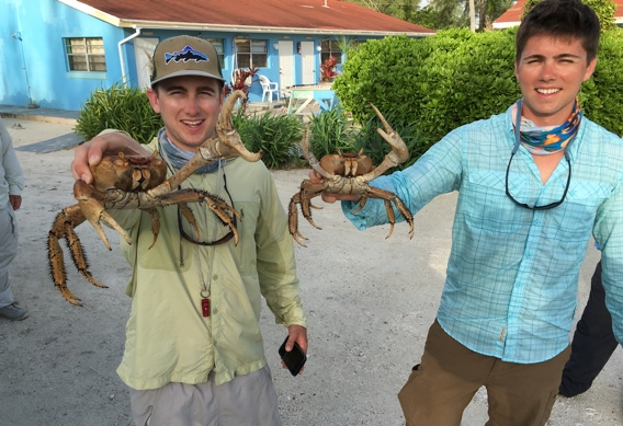 Land crabs at Andros South