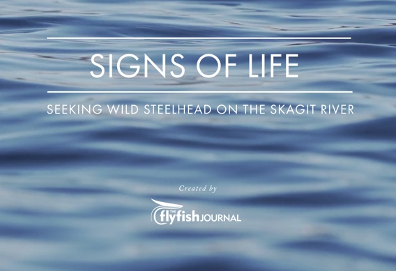 "The Flyfish Journal ""Signs of Life"" Skagit River steelhead essay"
