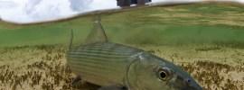 Underwater bonefish by Tosh Brown