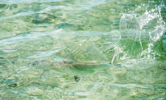 Camouflage bonefish by Bill Kalm