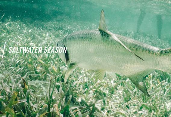 Sage Saltwater Season campaign