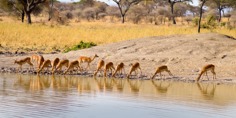 15-Days-Kenya-Tanzania-safari-to-Tarangire-Serengeti-Ngorongoro-Amboseli-Mt.-Kenya-Samburu-&-Ol-Pejeta-Sweetwaters-banner