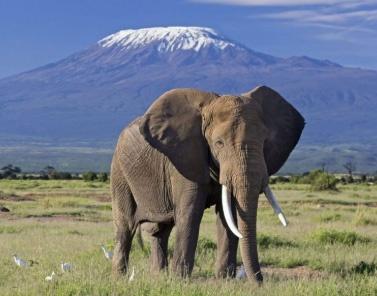 Amboseli-Highlights-Safaris