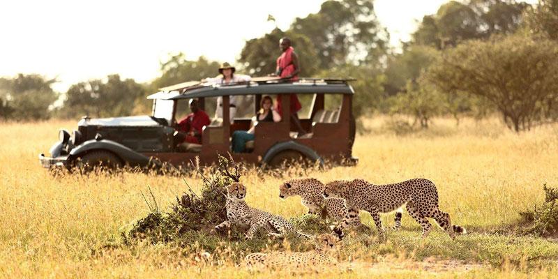 masai-mara-lake-nakuru-safari
