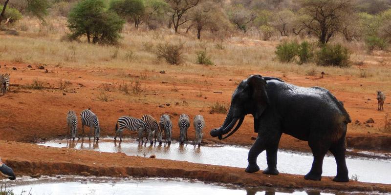 Kenya 2 days safari tsavo-west-national-park-taita-hills