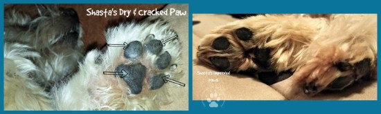 Shasta's Paws Before and After