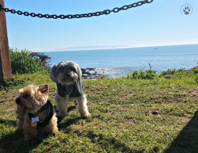 Snapshot Sundays February-Shasta and Teddy Pismo