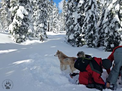Snapshot Sundays February-Snowshoeing Shasta, Zara, Denton and Deb