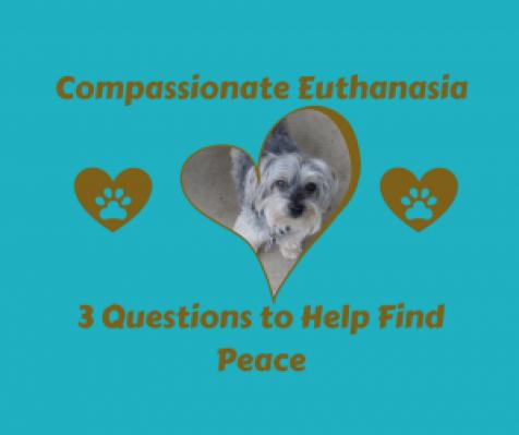 Compassionate Euthanasia-Denise's Dog Dish