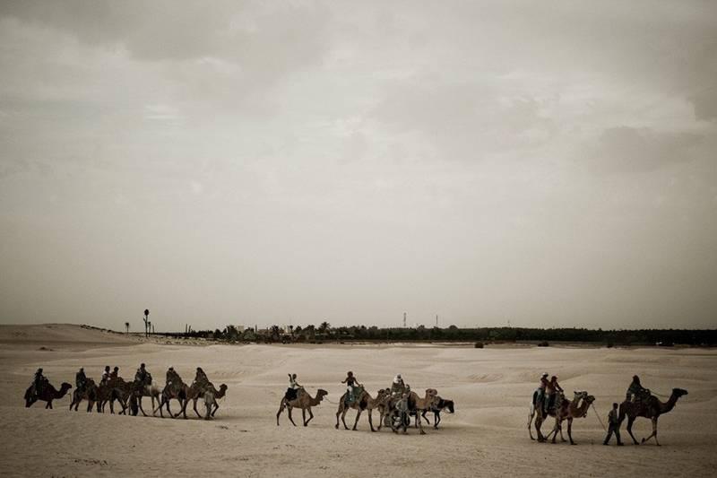 Tunisia, Africa, Safari, camels