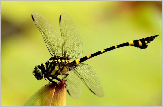 Life Cycle Of A Dragonfly Oral Denizsoft Windows Dp