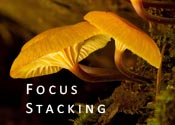 Focus Stacking
