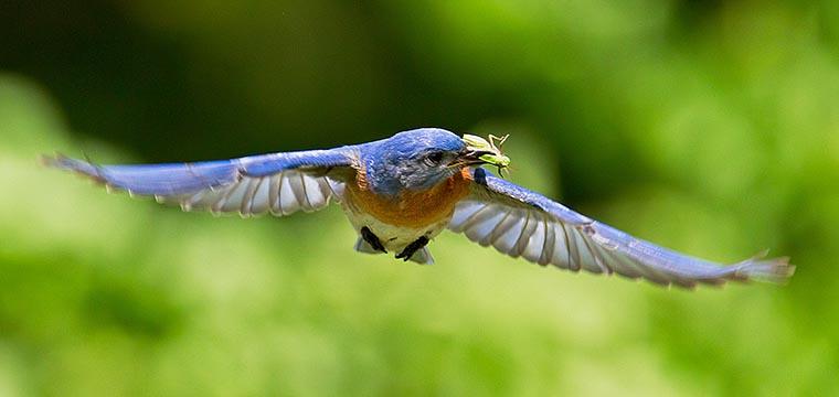 Birding Cape May, NJ   3-10 May 2012