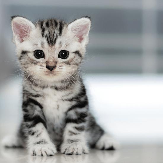 50+ Koleksi Gambar Kucing Comel - Dennis G. Zill