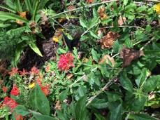 2014-08-31 Atlanta Botanical Garden-06