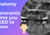 Anatomy of Panoramic Films