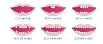 Les dents de lait