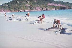 video-delfini-spiaggiati-brasile