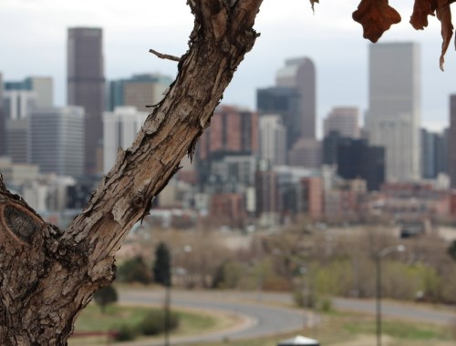 This week in Denver tree