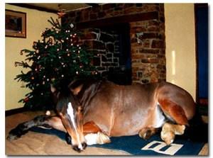 Christmas Tree Horse