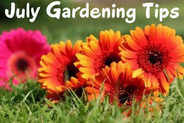 July Garden