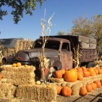 The Best Pumpkin Patches Around Denver