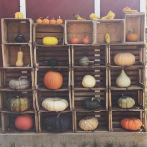 munson-farm