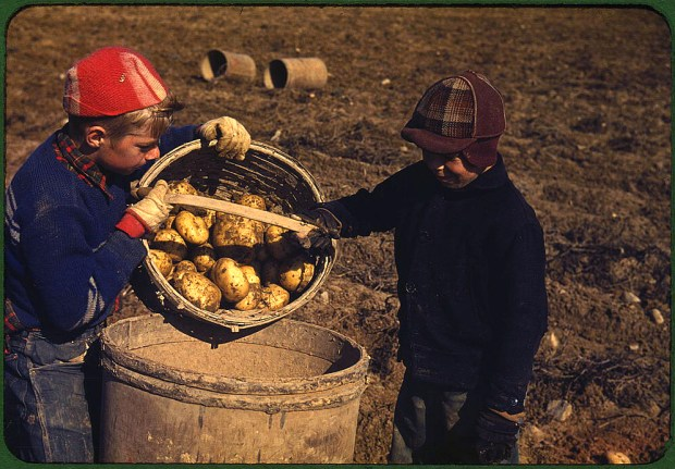 Children gathering potatoes on a large farm. Vicinity of Caribou, Aroostook County, Maine, October 1940. Reproduction from color slide. Prints and Photographs Division, Library of Congress